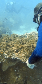 feral-human-expeditions-cambodia-reefs-ruins-20