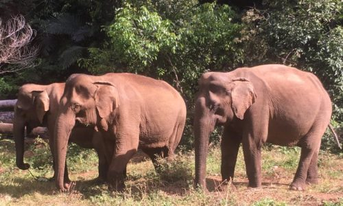 feral-human-expeditions-elephants