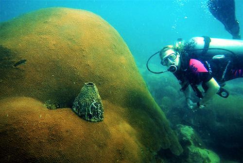 Cambodia Reef Dive